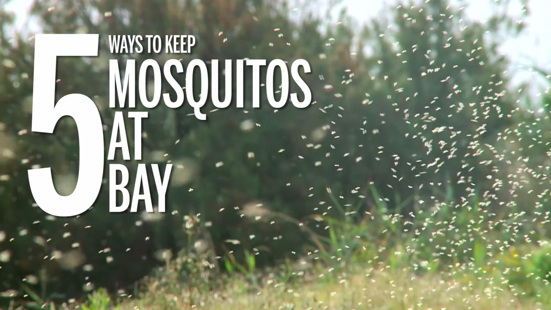 5 ways to keep mosquitoes at bay
