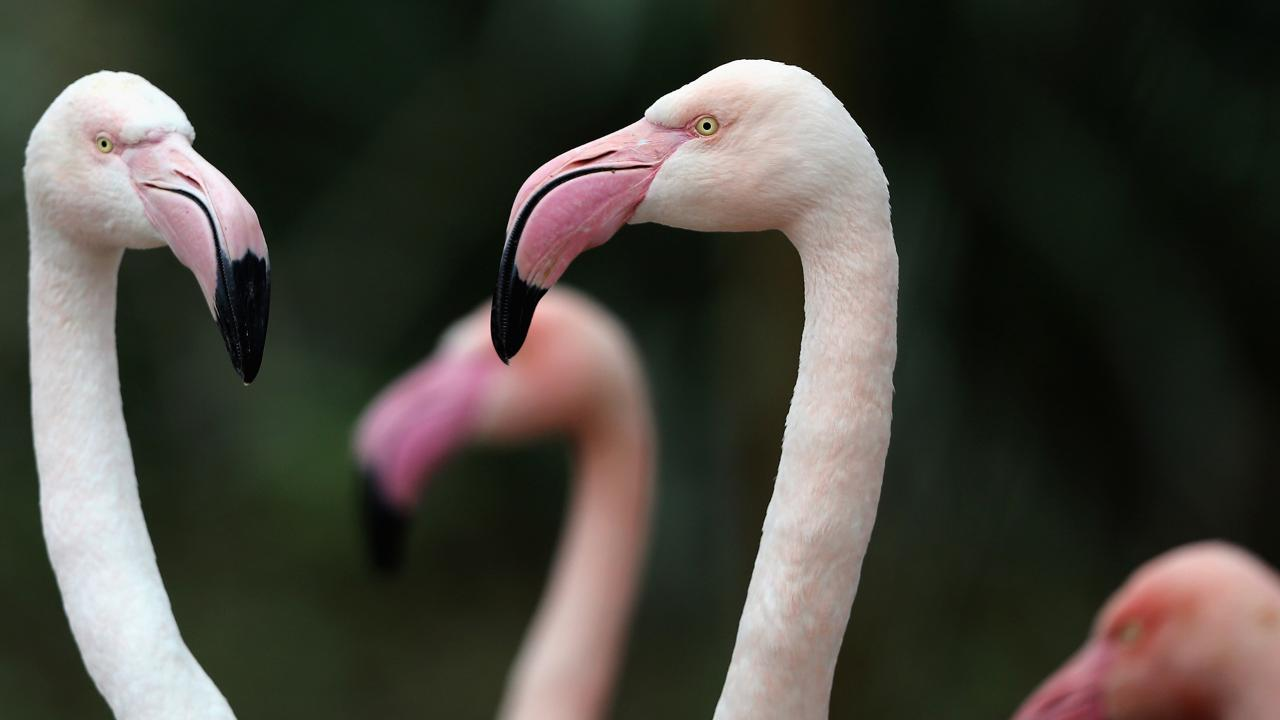 SeaWorld and the Humane Society Urge 'Zero Tolerance' in Pinky the Flamingo Case
