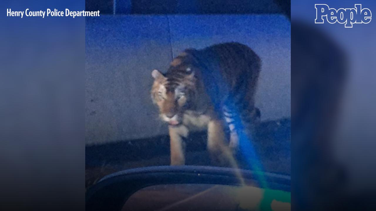 A Bengal Tiger Wandered Into a Residential Neighborhood and Attacked a Dog