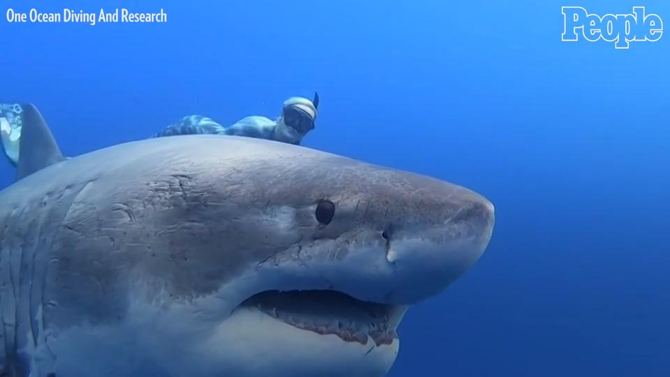 Great White Shark Tracked Off Long Island Sound for the First Time: See Where the Shark Is Now!Great White Shark Tracked Off Long Island Sound for the First Time: See Where the Shark Is Now!