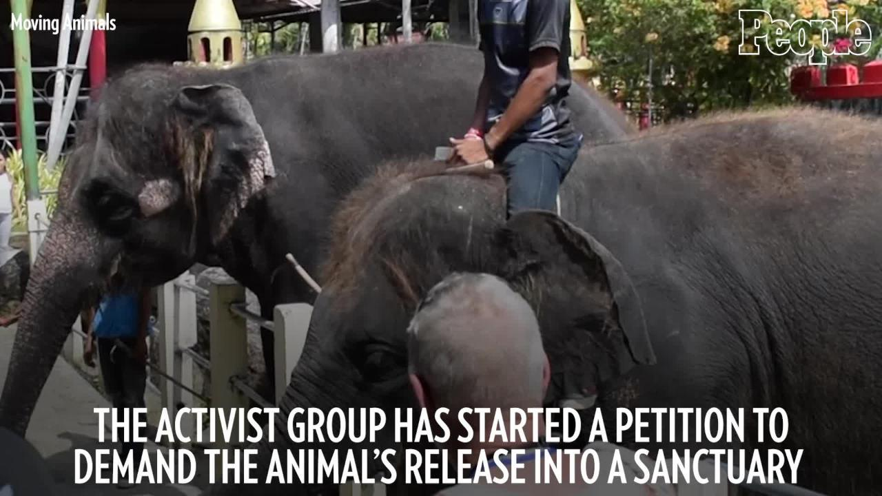 Baby Elephant Dies at Thailand Zoo Days After Being Forced to Perform For Tourists