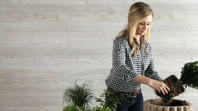How To Plant A Boxwood Container