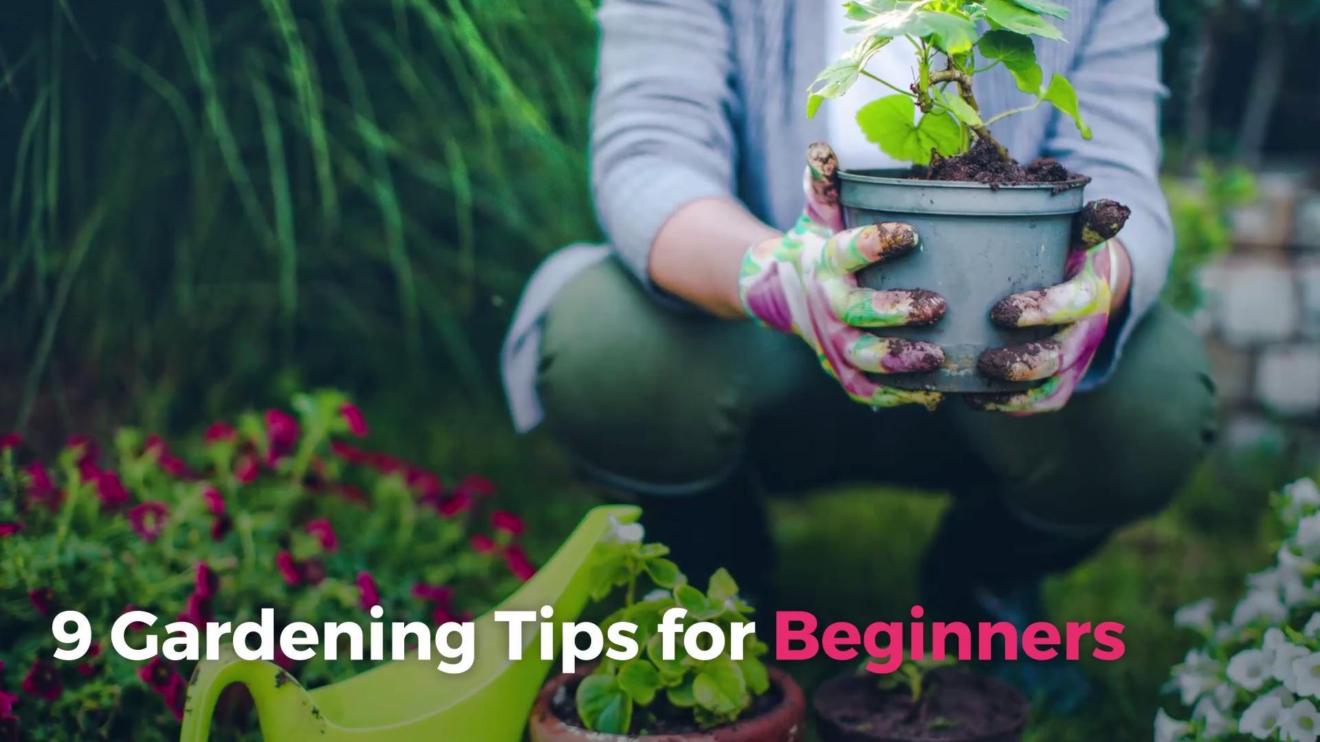 9 Gardening Tips for Beginners