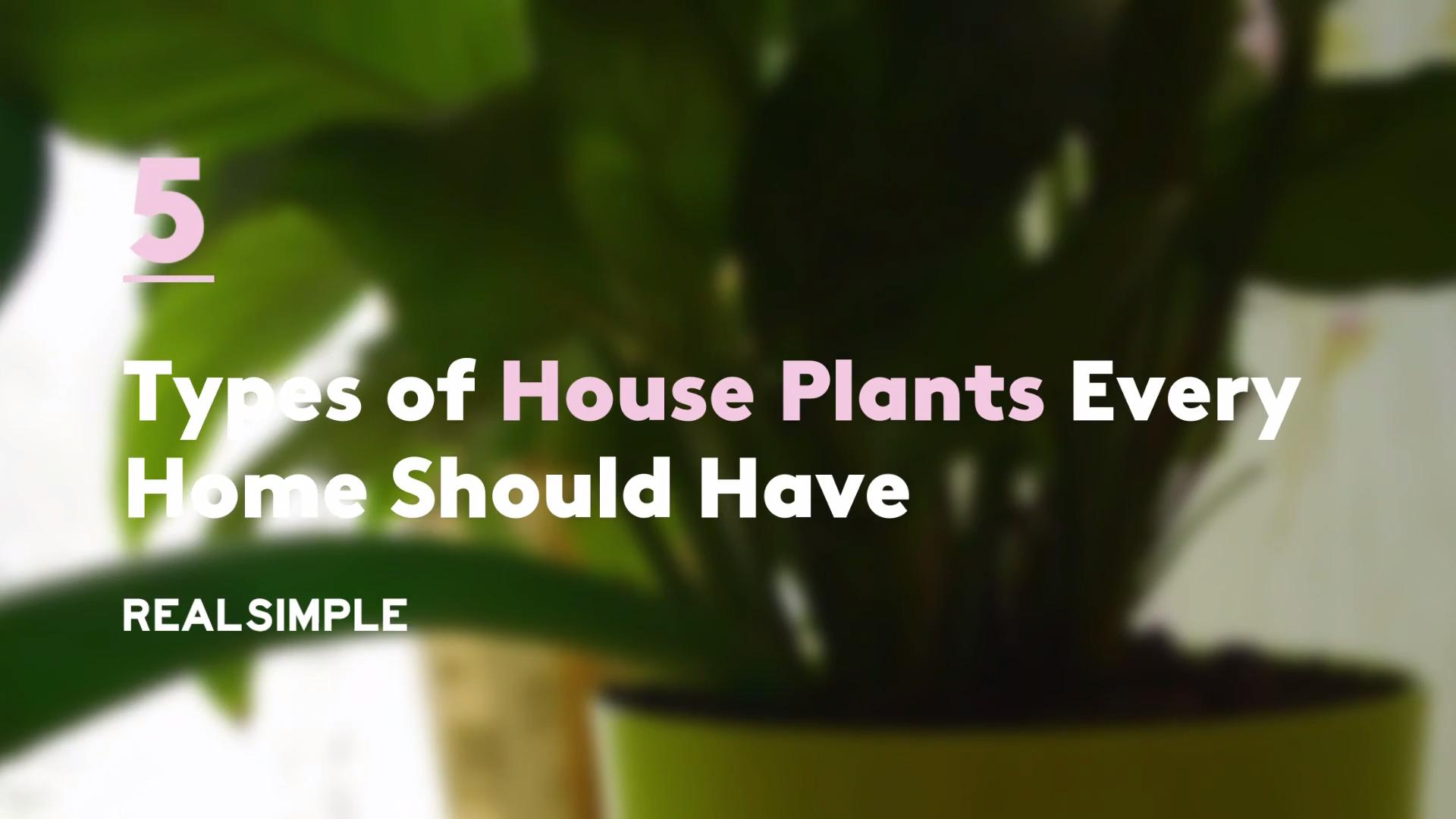 5 Types of House Plants Every Home Should Have