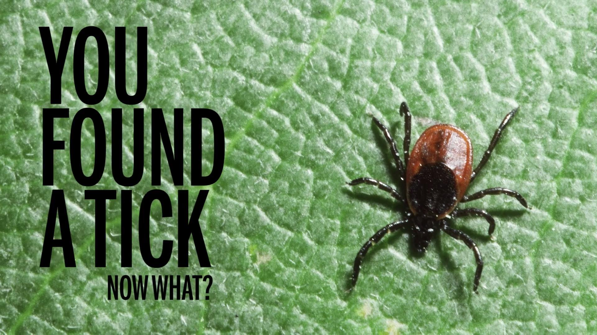 how to get ticks off your clothes health