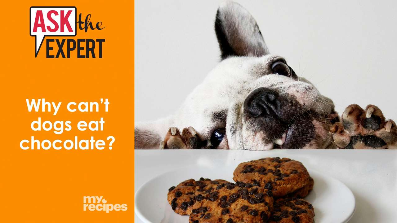 Can Chocolate Really Harm My Dog? - Cooking Light