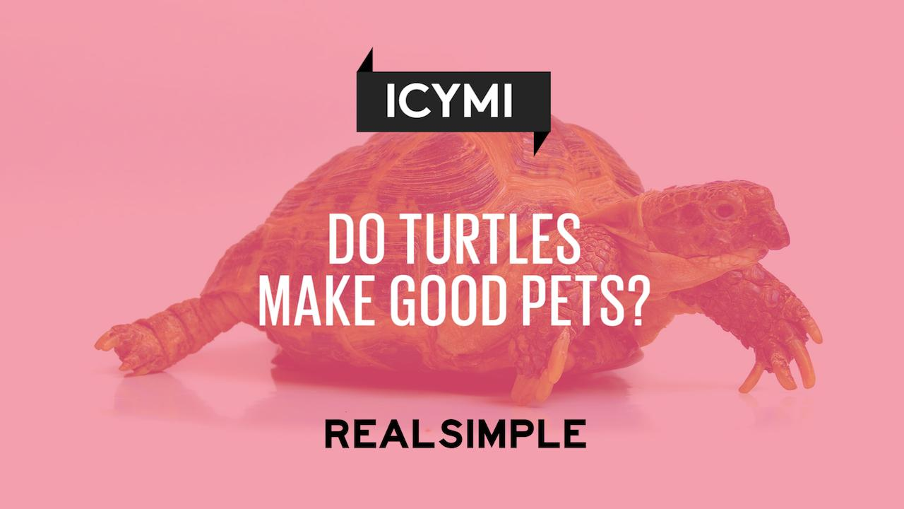 do turtles make good pets real simple