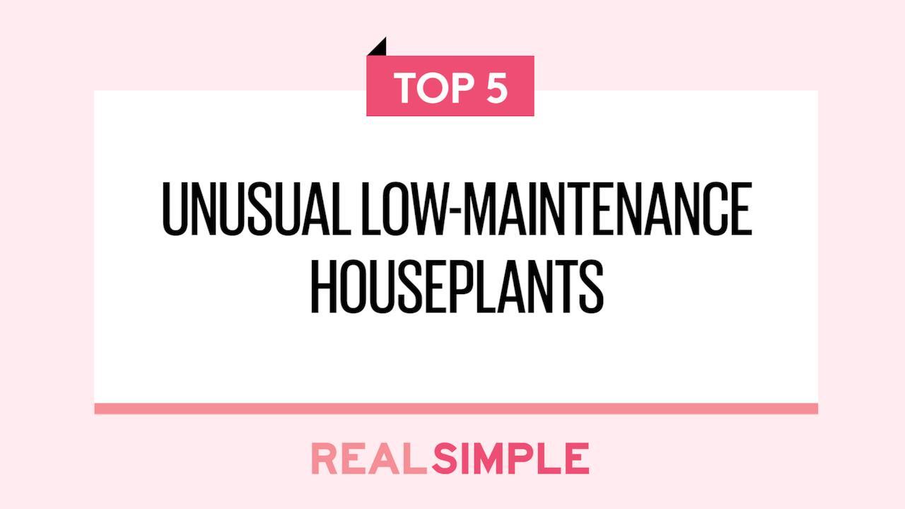 unusual low maintenance houseplants you probably haven u0027t heard of